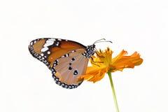 Flores de mariposa. Foto de archivo