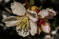 Flores de mi jard?n E imagenes de archivo