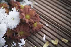 Flores de morte Wilted com pétalas caídas Fotos de Stock