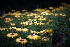 Flores de noche en parque Imagen de archivo
