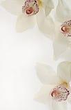 Flores de Orhids Imagem de Stock