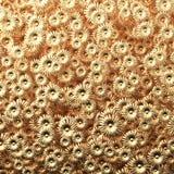 Flores de oro de la belleza scatering en el ejemplo de la pared 3D Fotos de archivo libres de regalías