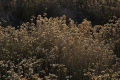 Flores de oro iluminadas Foto de archivo libre de regalías