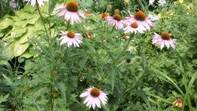 Flores de Pale Pink filme