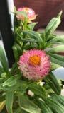 Flores de papel foto de archivo libre de regalías