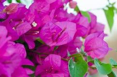 Flores de papel Foto de Stock