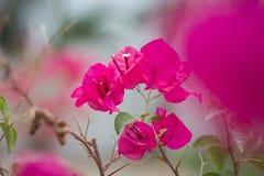 Flores de papel Imagen de archivo libre de regalías