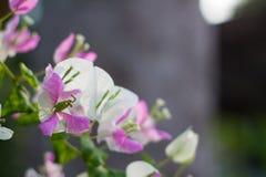 Flores de papel Fotos de archivo libres de regalías