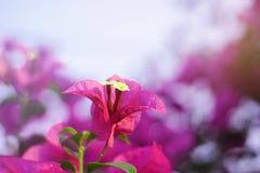 Flores de papel hermosas Fotos de archivo libres de regalías