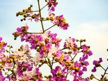 Flores de papel natual bonitas! Imagem de Stock