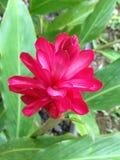 Flores de paraíso Imagen de archivo libre de regalías
