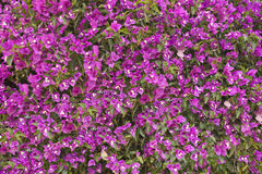 Flores de pared únicas Imagen de archivo