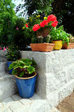 Flores de pared de piedra del jardín Imágenes de archivo libres de regalías