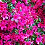Flores de pared del tiempo de primavera Imágenes de archivo libres de regalías