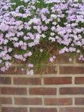 Flores de parede Fotografia de Stock Royalty Free