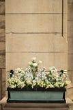 Flores de parede Imagens de Stock Royalty Free