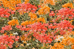Flores de parede originais fotos de stock