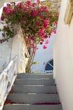 Flores de pavão Imagem de Stock Royalty Free