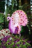 Flores de pavo real Imágenes de archivo libres de regalías