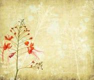 Flores de pavo real en árbol Foto de archivo libre de regalías