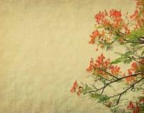 Flores de pavo real en árbol Imagen de archivo libre de regalías