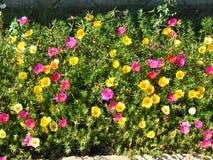 Flores de pedra Imagem de Stock Royalty Free