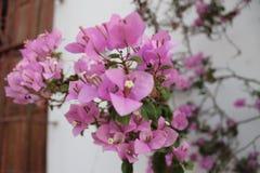 Flores de Perú Stockbilder