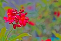 Flores de Peregrina imagenes de archivo