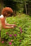 Flores de poda Fotografia de Stock Royalty Free