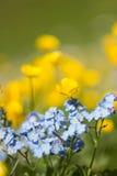 Flores de prados alpinos Fotografía de archivo libre de regalías
