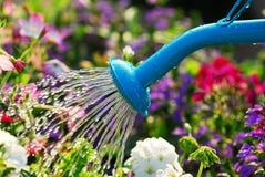 Flores de riego Imagen de archivo libre de regalías