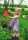 Flores de riego Fotografía de archivo libre de regalías