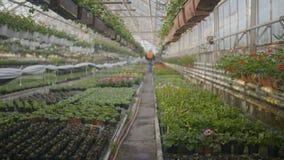 Flores de riego del trabajador adentro almacen de video