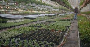 Flores de riego del trabajador en 4K metrajes