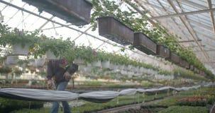 Flores de riego del trabajador en 4K almacen de metraje de vídeo