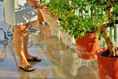 Flores de riego de la mujer en el balc?n fotos de archivo