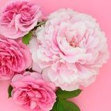 Flores de Rosa e de peônia fotos de stock