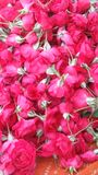 Flores de Rose fotos de archivo