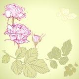 Flores de Rose Imagenes de archivo