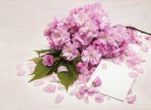 Flores de Sakura en la tarjeta de Day del profesor Foto de archivo libre de regalías