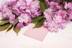 Flores de Sakura en la tarjeta de Day del profesor Fotografía de archivo libre de regalías