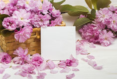Flores de Sakura en la tarjeta de Day del profesor Imagen de archivo