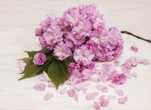 Flores de Sakura en la tarjeta de Day del profesor Fotos de archivo