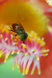 Flores de Sala Imagenes de archivo