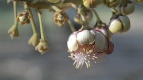 Flores de Sala almacen de metraje de vídeo