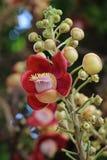 Flores de Sala Foto de Stock