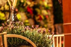 Flores de Salvia na luz morna no interior colorido na luz abafado imagem de stock