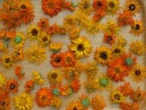 Flores de secagem do cravo-de-defunto na tabela Foto de Stock