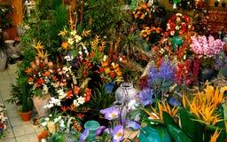 Flores de seda Fotos de Stock Royalty Free