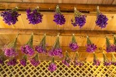 Flores de sequía Imagen de archivo libre de regalías